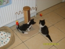 Molly & Oscar's first night in Dunstable